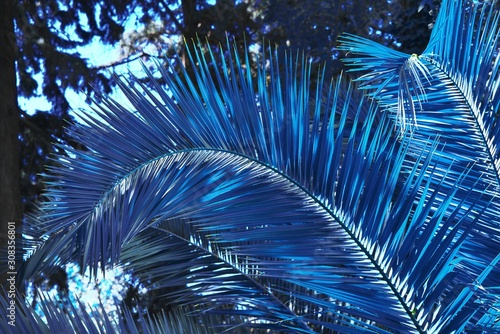 palm-leaf-dark-toned-in-classic-blue-2020-year-color-tropical-jungle-palm-tree-branch-foliage-floral-pattern-summer-background-nature-spring-season-concept-abstract-art-luxury-decor-texture-closeup