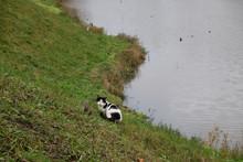 Hunter Cat And Wild Birds