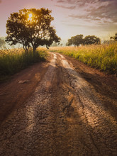 Road In The Field Against The Sunrise Background With Nature Tree.Beautiful Landscape For Adventure Travel.Vintage Tone.