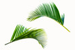 canvas print picture - Beautiful coconut leaf isolated on white background, tropical summer background