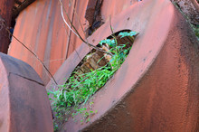 Plants Growing Out Of Rusty Me...