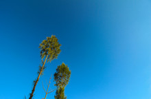 Leafy Trees Under The Blue Sky...