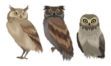 Different Species Of Owls Collection, Wild Forest Predatory Birds Vector Illustration