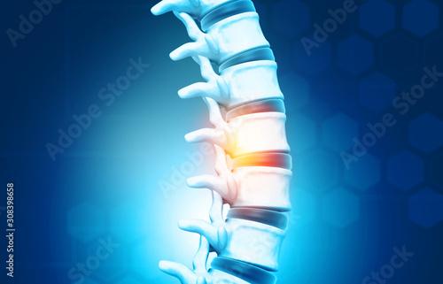 Fotomural Human spine, vertebrae anatomy on science background