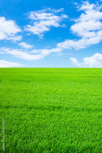 Vászonkép 草原と青空