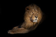 canvas print picture - lion portrait on a black background. lion on a black background. powerful lion male with a chic mane consecrated by the sun.
