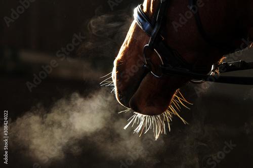 Leinwand Poster Detail Pferdekopf