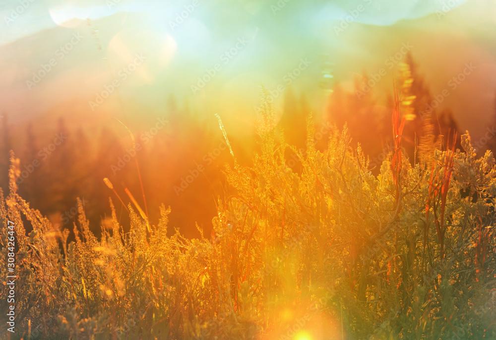 Fototapeta Autumn meadow - obraz na płótnie