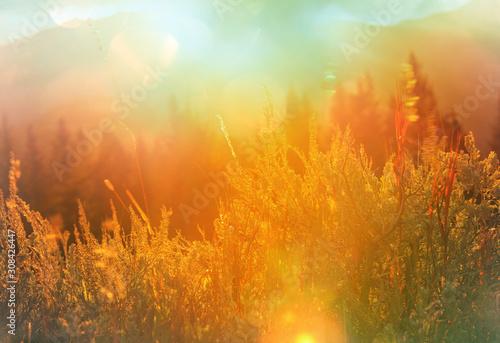Obraz Autumn meadow - fototapety do salonu