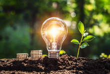 Energy Concept. Eco Power. Lightbulb With Money And Young Plant On Soil Sunlight Background