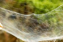 Spinnennetz B