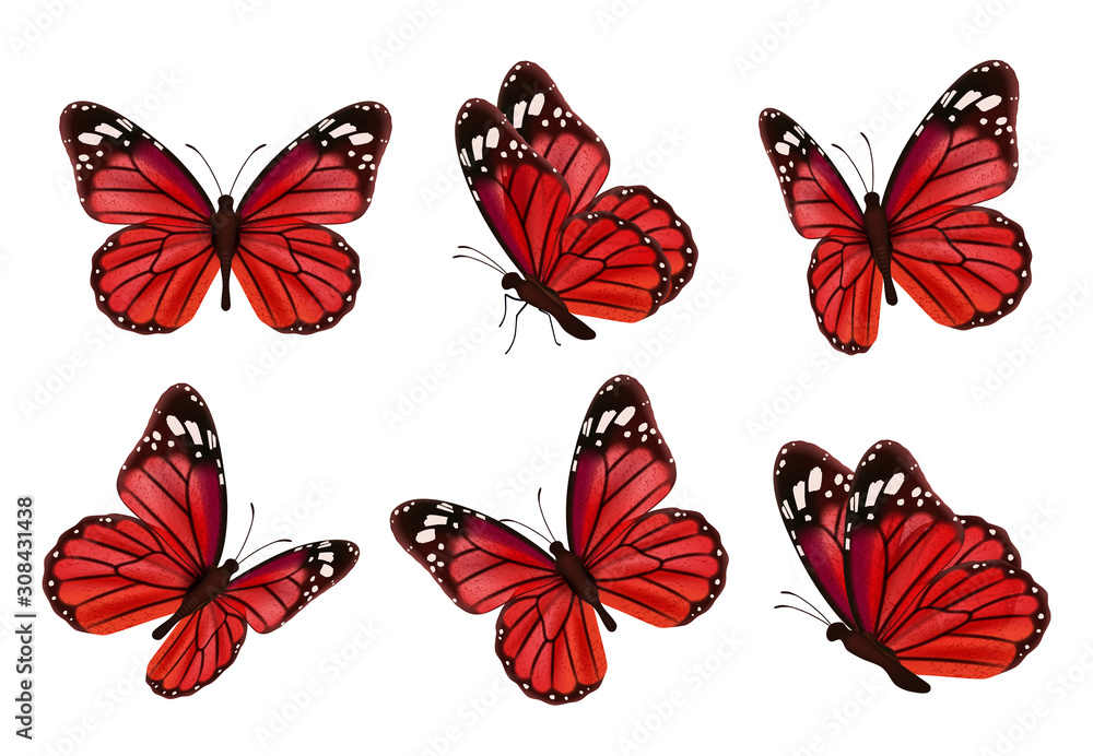 Fototapeta Butterflies. Realistic colored insects beautiful moth vector collection of butterflies. Illustration set of flying butterfly red black