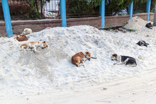 Stray Dogs Sleep On A Heap Of ...