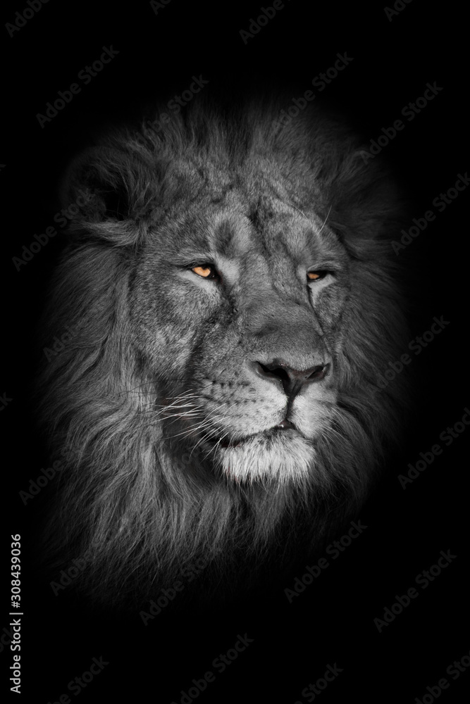 bright yellow glowing eyes, discolored muzzle lion male with chic mane portrait close-up.