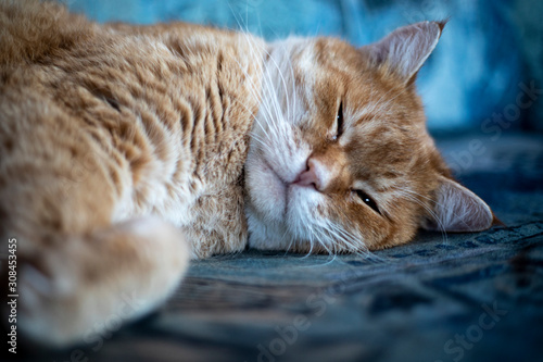 Katze schläft auf Couch 2 Obraz na płótnie