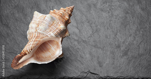 Foto Sea shell on black stone background