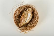 Bird Sculpture In A Nest