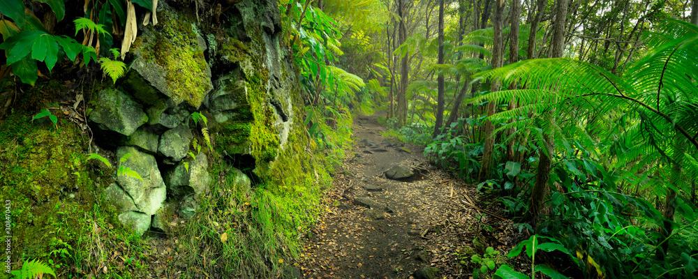 Fototapeta Lush rainforest in Volcanoes National Park Big Island Hawaii, USA