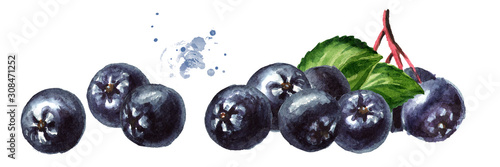 Heap of Aronia berries or black chokeberry with green leaves. Watercolor hand drawn horizontal illustration isolated on white background