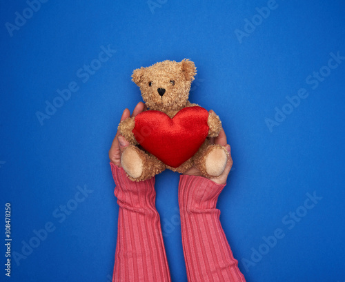 two female hands hold a small toy teddy bear