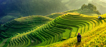 Mu Cang Chai, Vietnam Landscape Terraced Rice Field Near Sapa. Mu Cang Chai Rice Fields Stretching Across Mountainside In Vietnam.