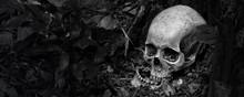 Skull And Jaw Put On Ground Ne...