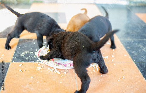 Fotografie, Obraz  Many small puppies that are eating food.