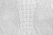 White Crocodile Leather Textur...