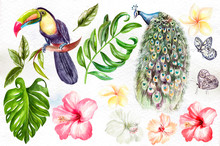 Watercolor Set With Tropical Leaves, Flowers, Peacock And Tukan Bird, Butterfly.