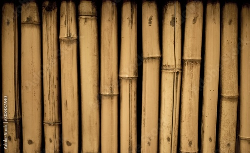 Papel de parede  Closeup shot of bamboos - great fro background or a blog