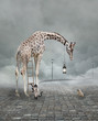 canvas print picture - Find a friend – Surreal conceptual illustration of a giraffe meeting a baby chicken