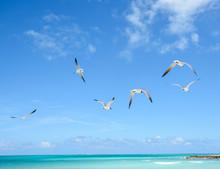 Flock Of Seagulls Flying Over ...