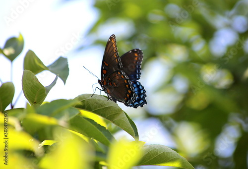 Beautiful swallowtail butterfly in the summertime