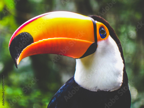 Photo colorful toucan bird of paradise