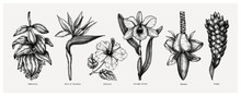 Tropical Flowers Sketches Collection. Vector Illustrations Of Exotic Flowering Plants - Medinilla, Bird Of Paradise, Hibiscus, Orchid, Ginger, Banana Flowers. Hand Drawn Floral Design Elements.