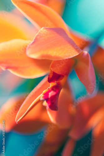 Canvas Print Orchid Macro Photo