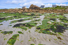 Beach With Seaweed At Low Tide, Brittany, Rocks And Houses In The Background, Sunny Light,ebb