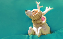 """New Year Card. Dog Jack Russell Terrier In A Hat With Christmas Deer Horns Looking At The Inscription """"Where Is Santa?"""" From Eclairs, Cakes, Cookies, Marshmallows And Donuts. Bakery Font. Christmas."""