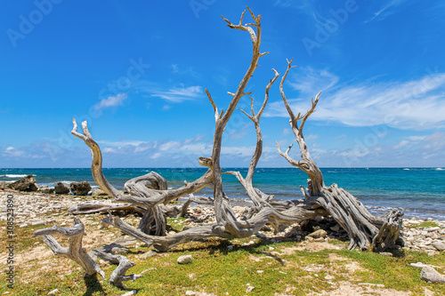 Tree washed ashore on coast near  sea Wallpaper Mural
