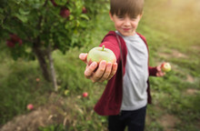 Boy Holding Fresh Picked Apple...