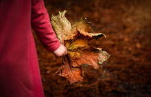 Child Holds Giant Fall Autumn ...