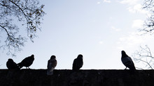 Silhouette Of Birds Standing O...