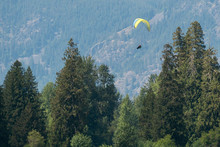 Paragliders Fly Above Tree Cov...