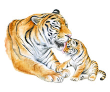 Tigers. Mom With A Child Isolated On A White Background. A Tigress Mum Washes A Baby. Watercolor. Illustration. Template. Close-up. Clipart. Mothers Day. Greeting Card Design.