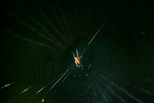 A Spider And Its Web Deep In The Forest