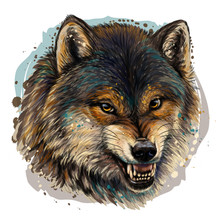 Angry Wolf. Sketchy, Graphical, Color Portrait Of A Wolf Head On A White Background With Splashes Of Watercolor.