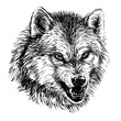 Angry wolf. Sketchy, graphical,  portrait of a wolf head on a white background.