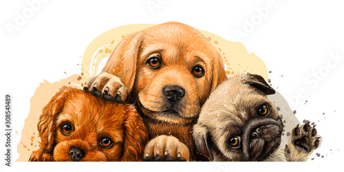 obraz lub plakat Puppies. Cavalier King Charles Spaniel, Labrador and Pug. Art, color wall sticker with the image of dogs on a white background in a watercolor style.