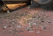 Dried Bird Poops On Concrete Floor