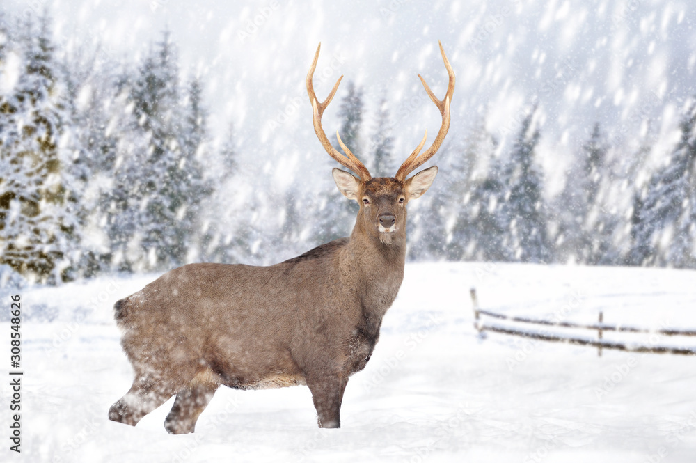 Deer in a snow on winter background